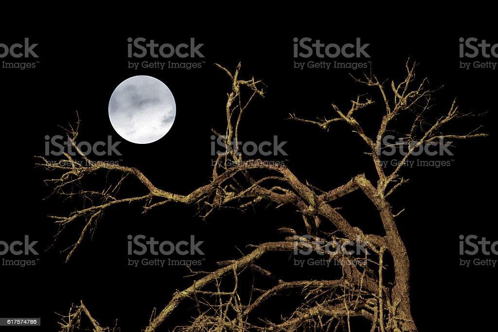 Nature Dark Scene Background stock photo