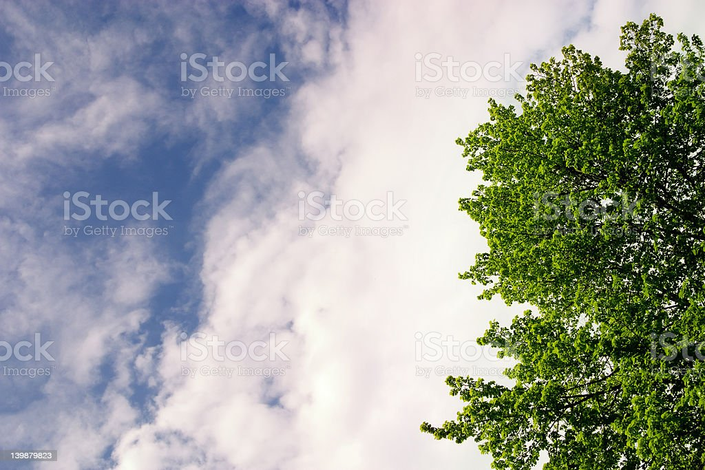 nature elements royalty-free stock photo