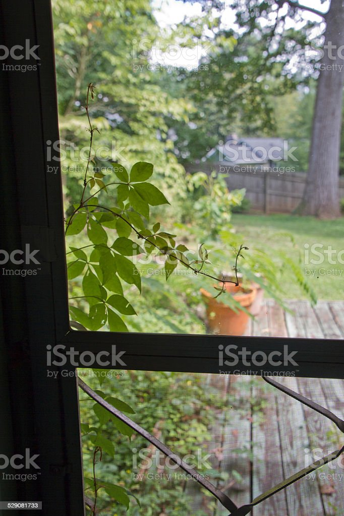 Nature Encroaching stock photo