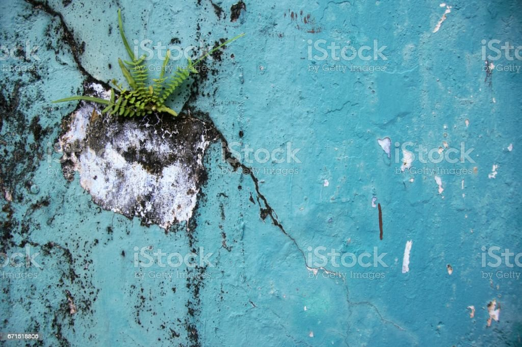 Nature fights back - Background stock photo