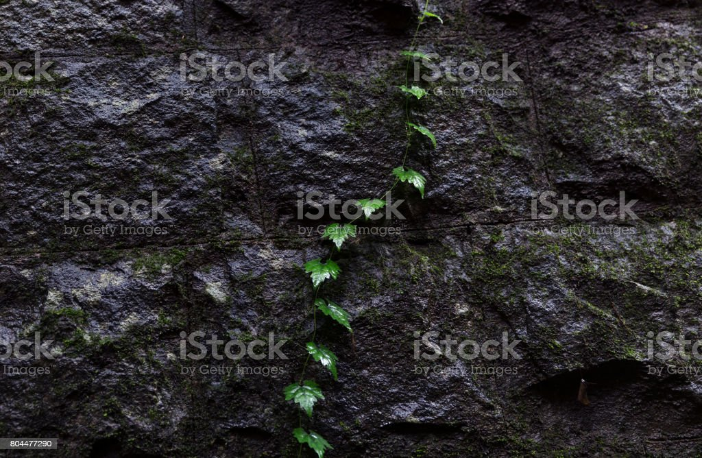 Nature finding a way through manmade architecture stock photo