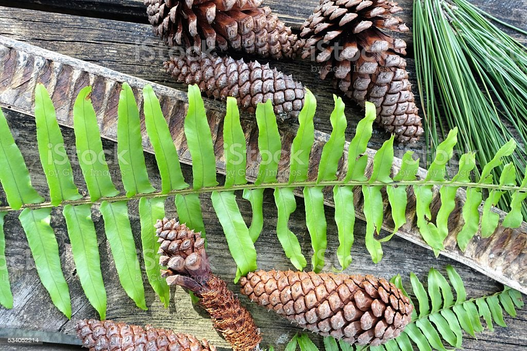 Nature flatlay with pine cones, seed pods, ferns stock photo