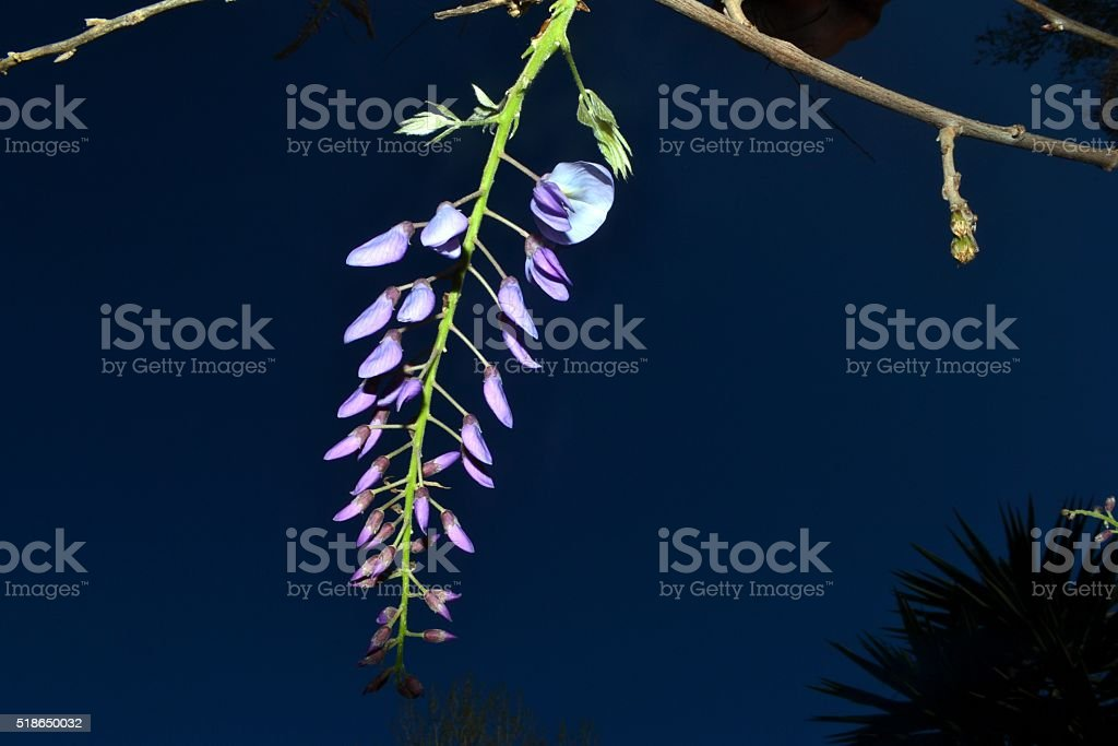 Nature, flower under sky stock photo