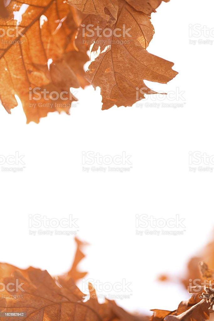 Nature frame stock photo