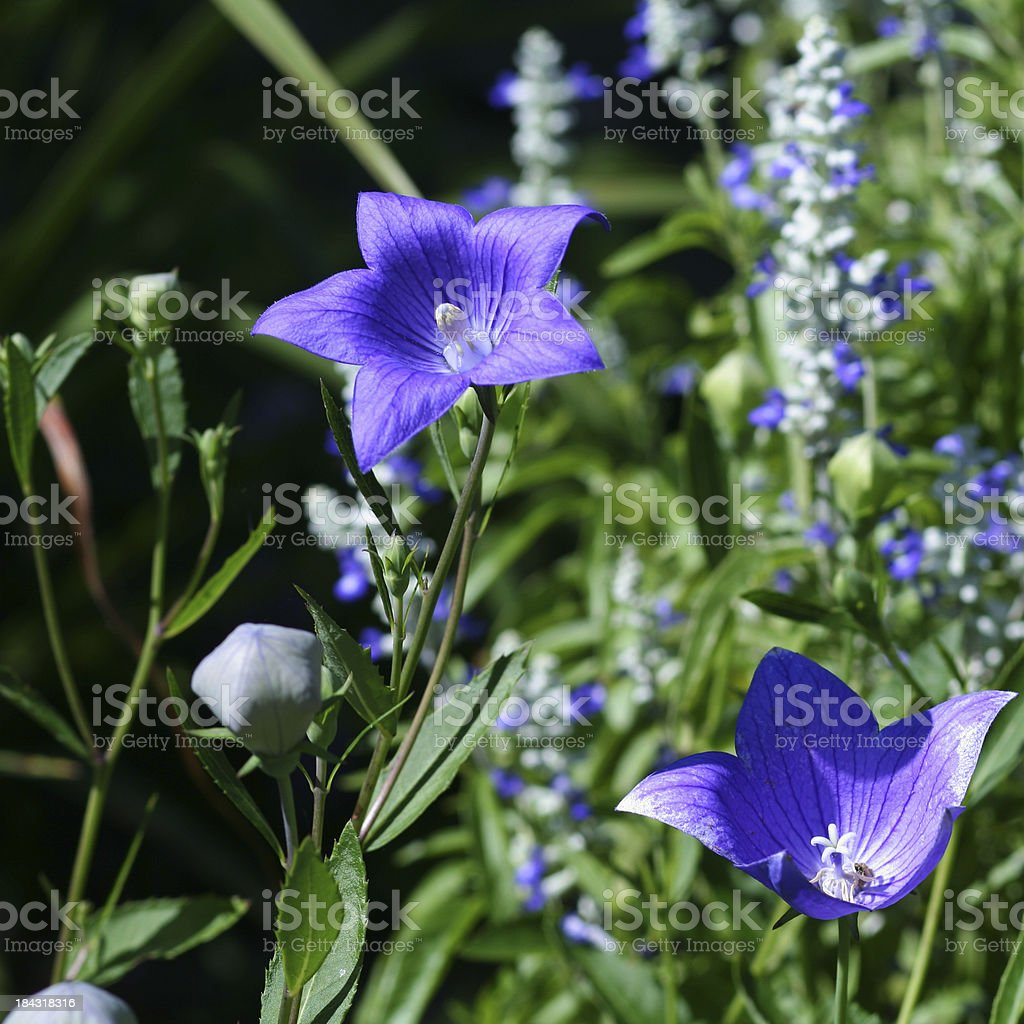 Nature: Garden stock photo
