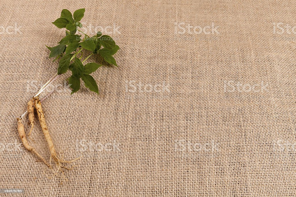 nature ginseng background stock photo