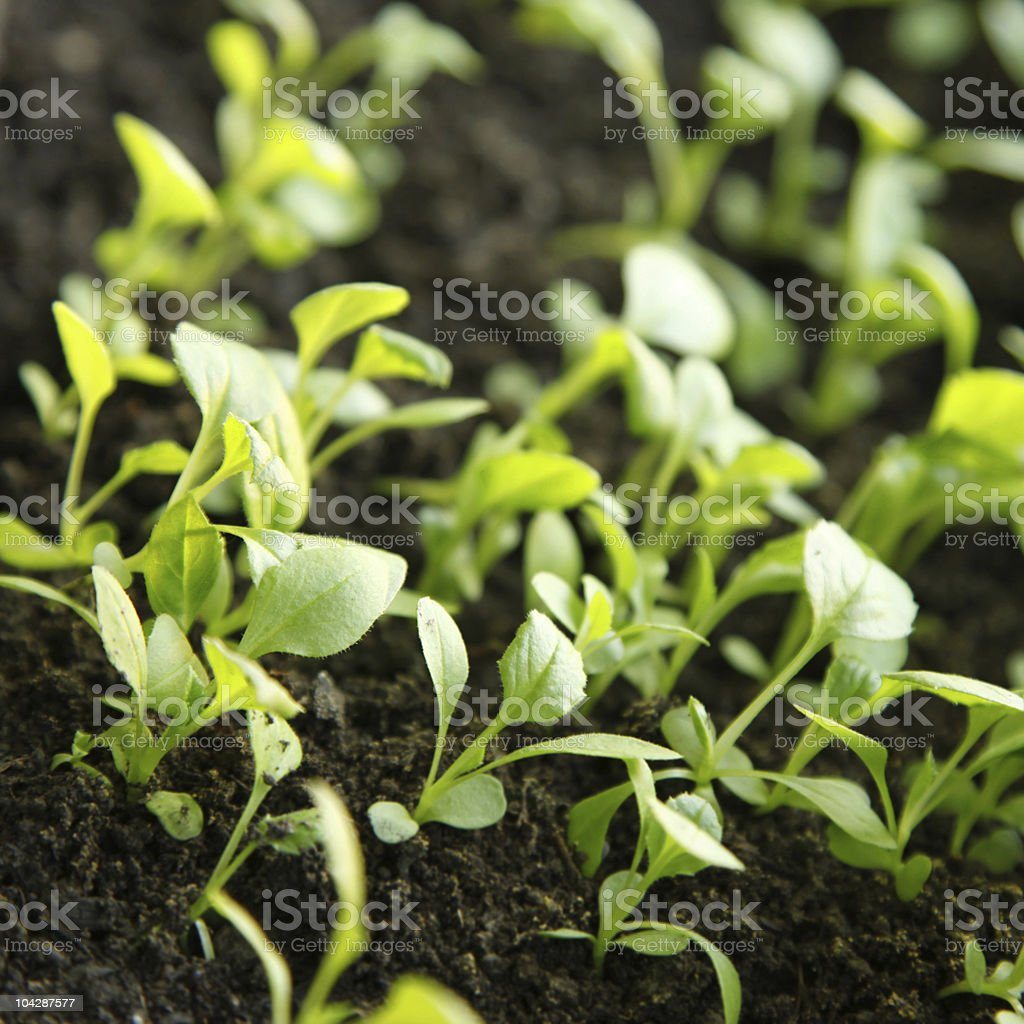 nature green background royalty-free stock photo