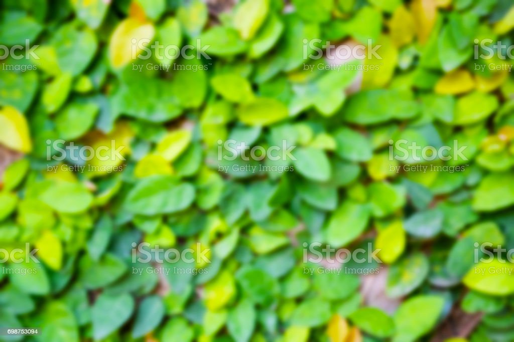 Nature green blurry boken leave background stock photo