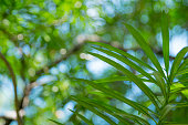 Nature green leaf with green color bokeh background