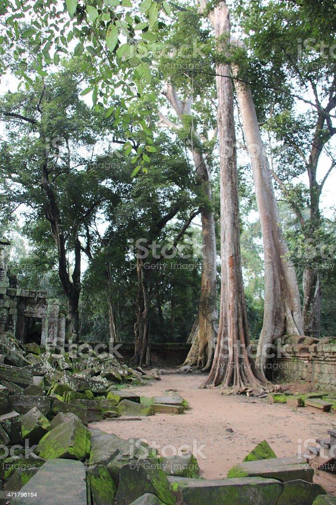 Naturaleza crecimiento templo de Angkor Wat, Camboya foto de stock libre de derechos