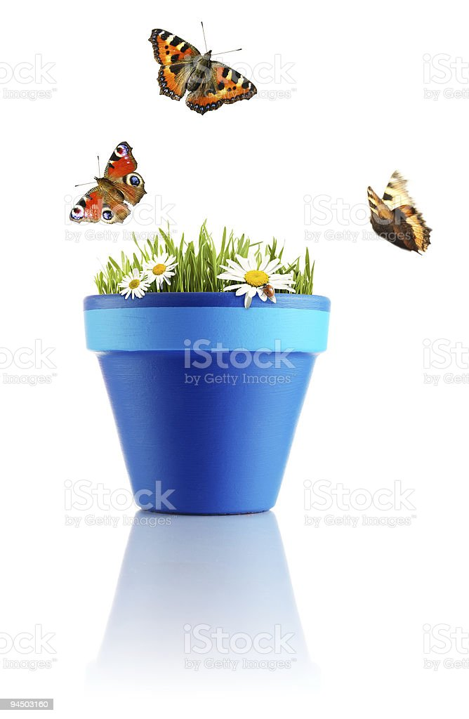 Nature in a pot royalty-free stock photo