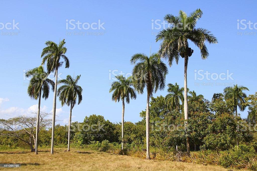 Nature in Cuba stock photo