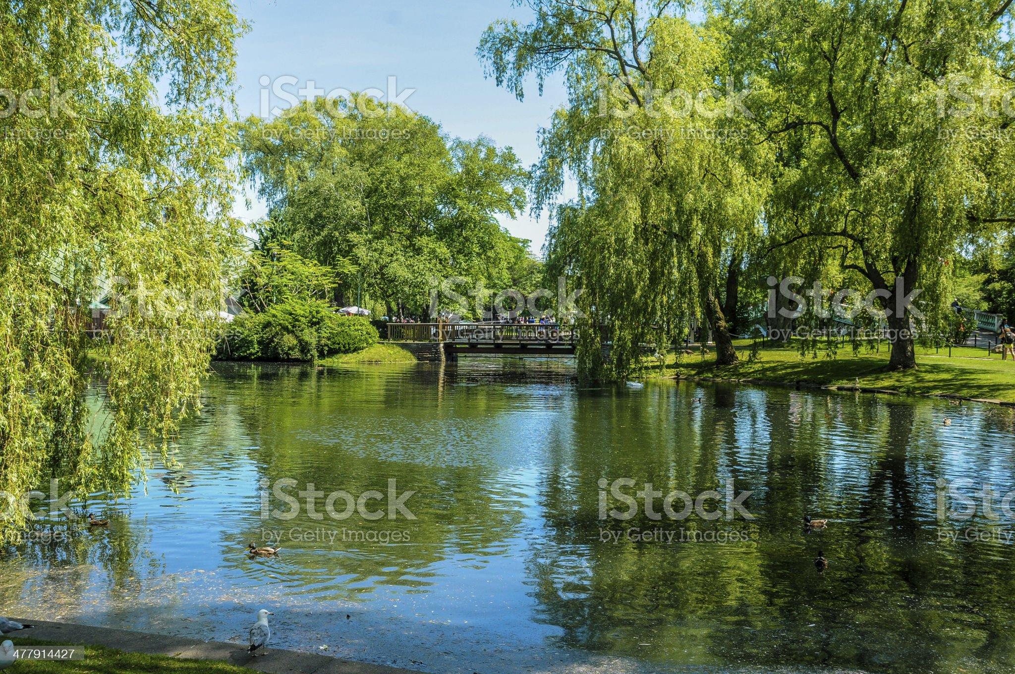 nature in island royalty-free stock photo