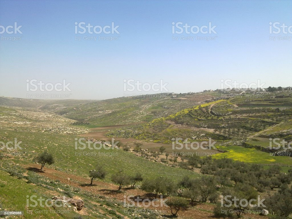 Nature in Palestine stock photo