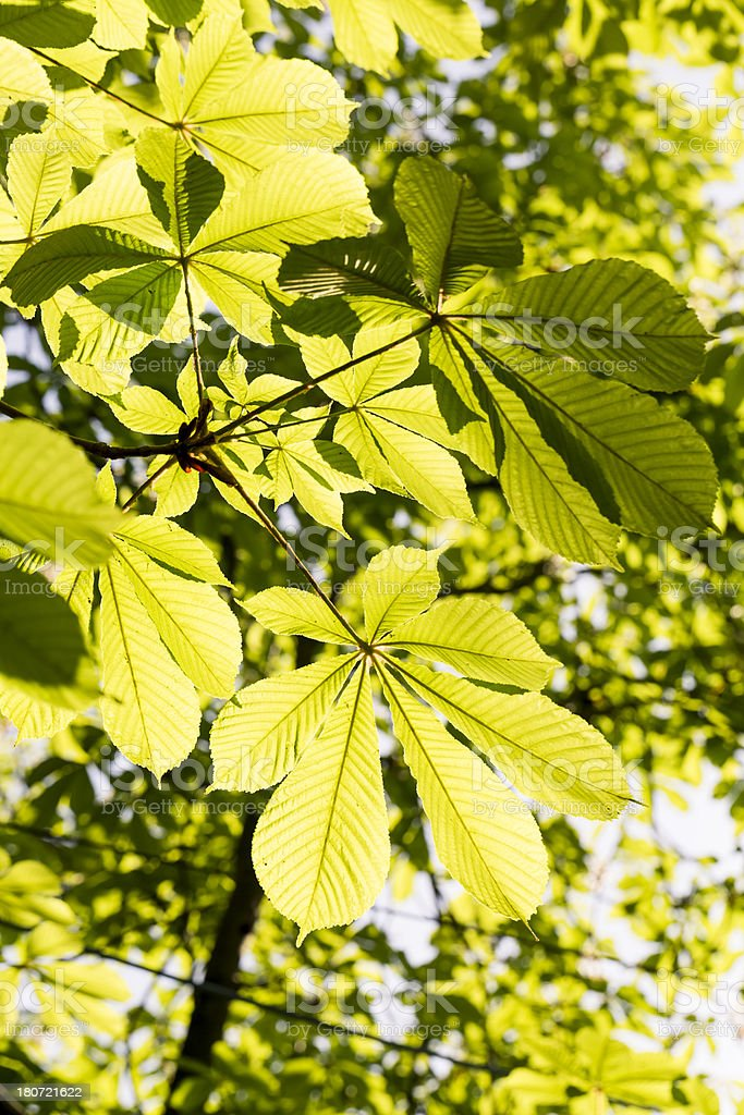 Nature in Spring royalty-free stock photo
