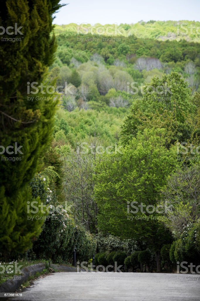 Nature in Springtime stock photo