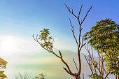 Nature in Sun Moon Lake