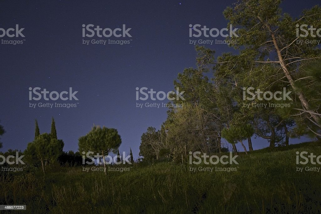 Nature in the night. royalty-free stock photo