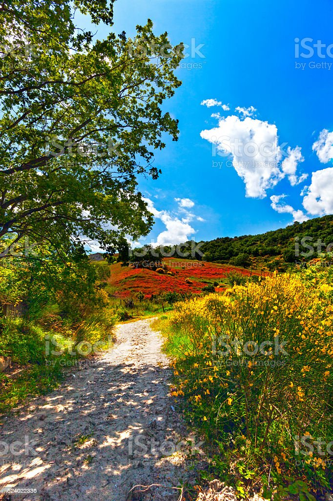 nature in the spring stock photo