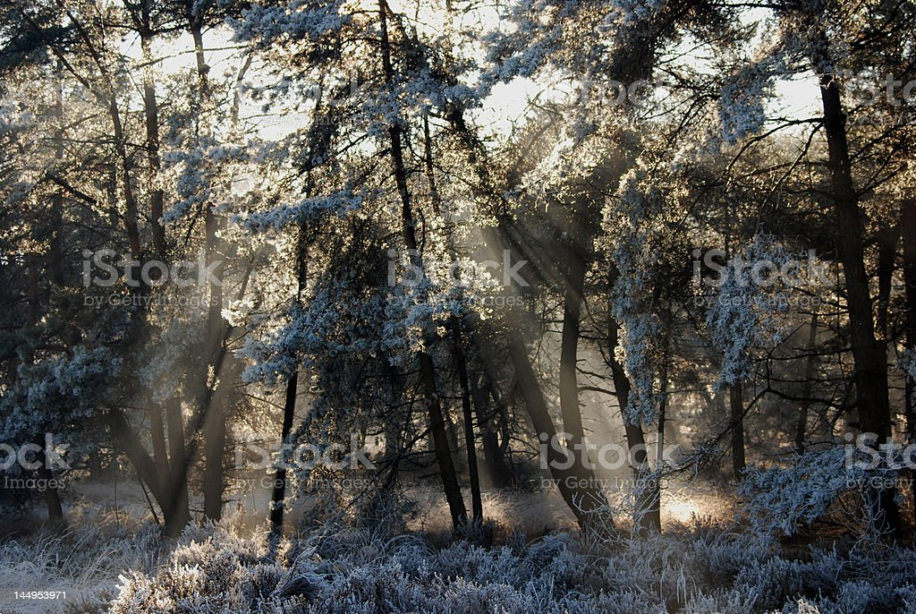 Nature in winter royalty-free stock photo