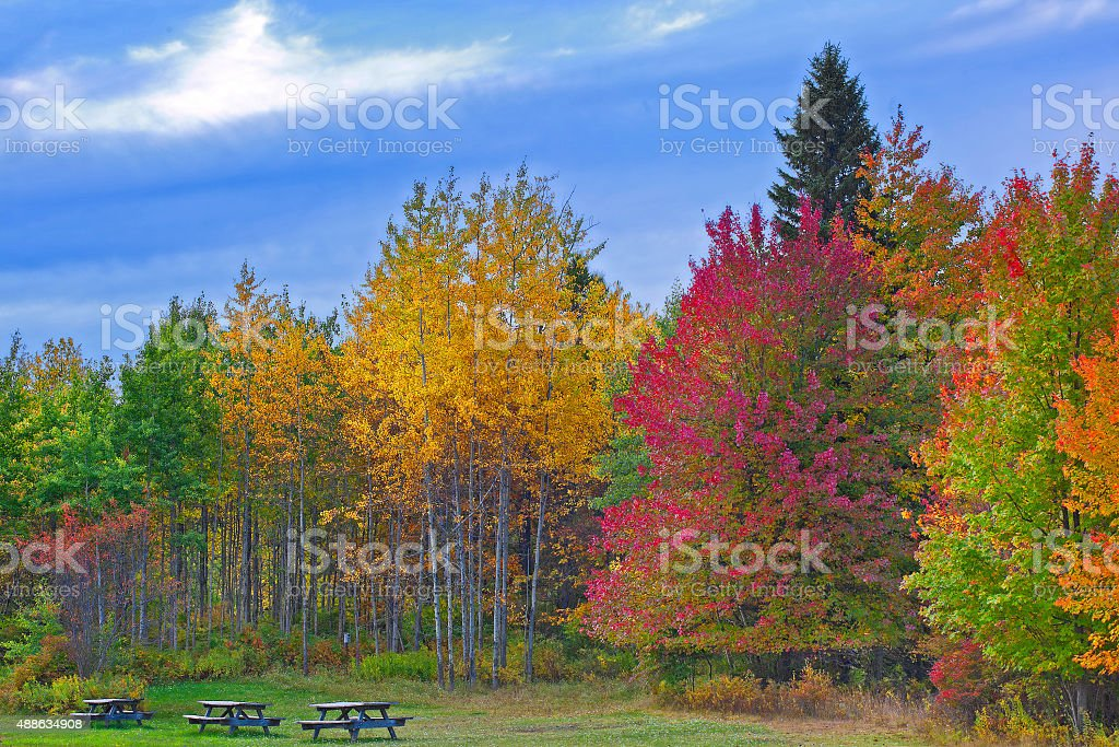 Nature landscape, Trees changing colors stock photo