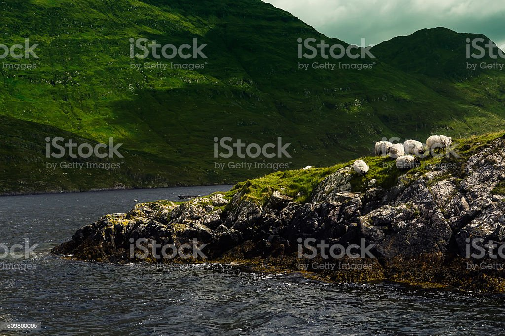Nature landscape with sheep and rocks - Ireland stock photo