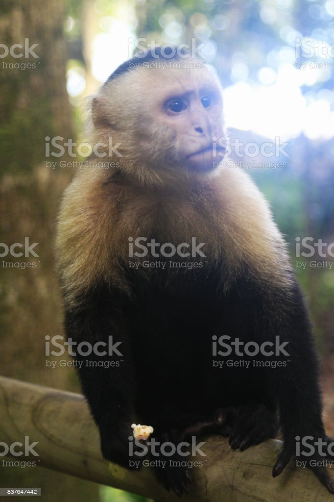 Nature landscapes in Costa Rica. Wildlife animals. America Travel. Wanderlust. stock photo
