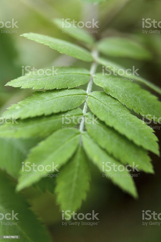 Nature: Leafs royalty-free stock photo