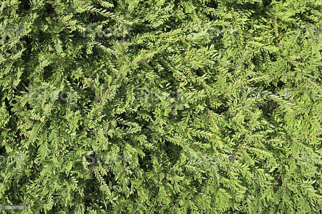 Nature leaves background stock photo