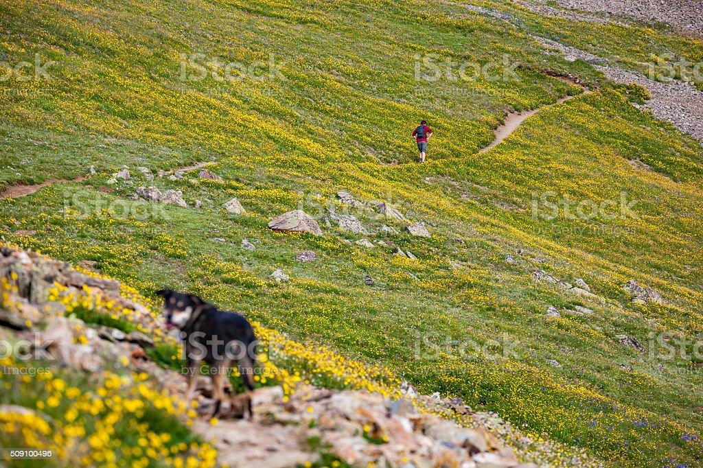 nature man dog landscape recreation stock photo