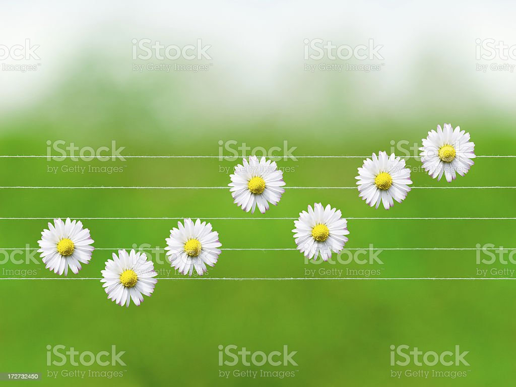 Nature melodies: Daisy royalty-free stock photo