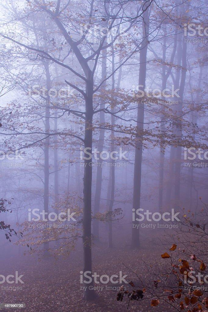 Nature Misty Forest Landscape stock photo