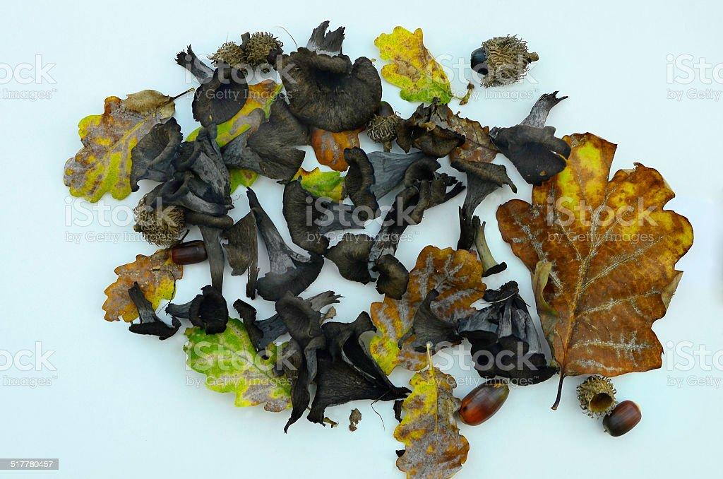 Nature, mushroom stock photo