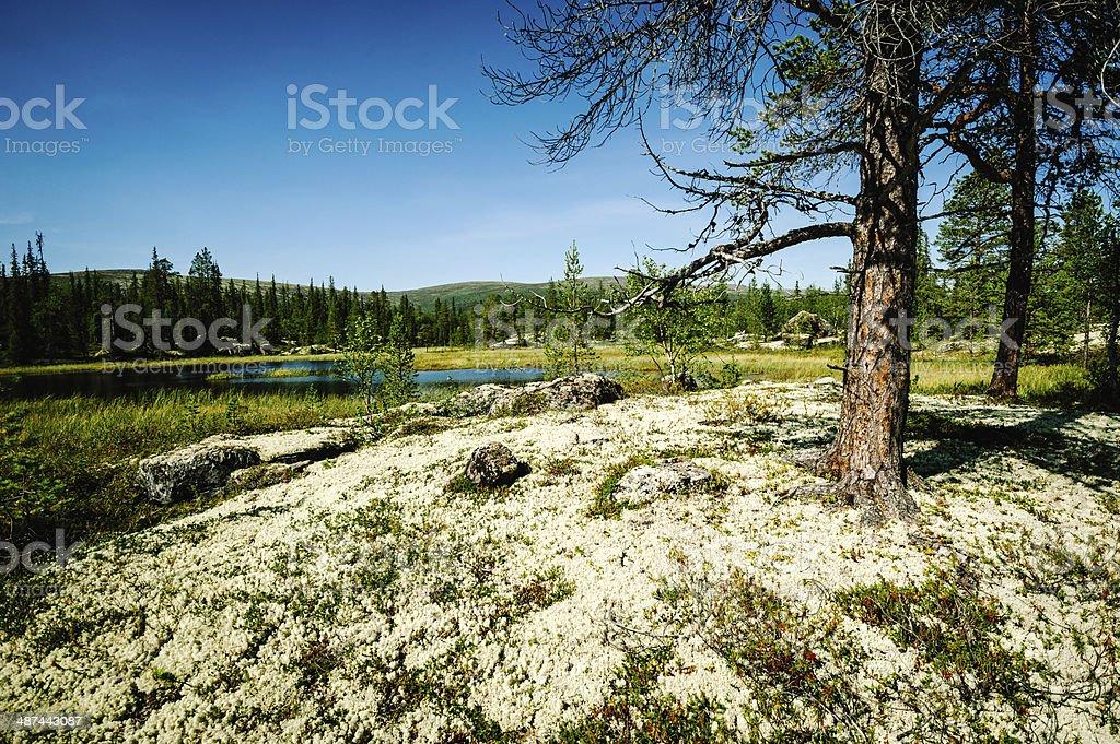 nature northern latitudes stock photo