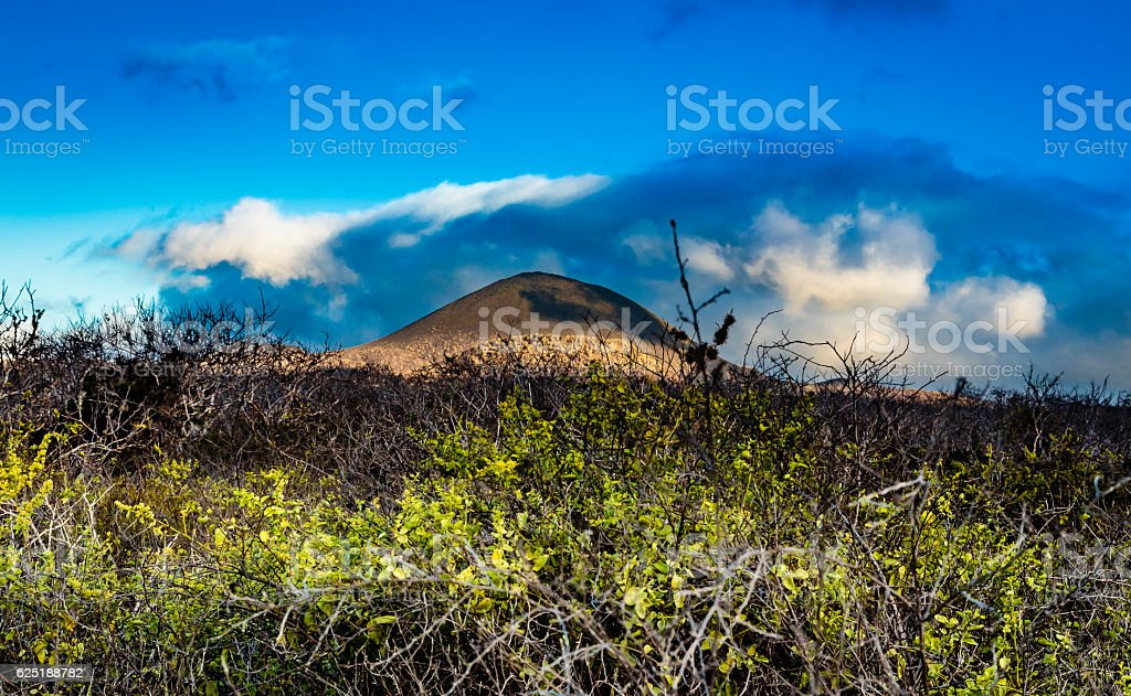 Nature of the Galapagos stock photo