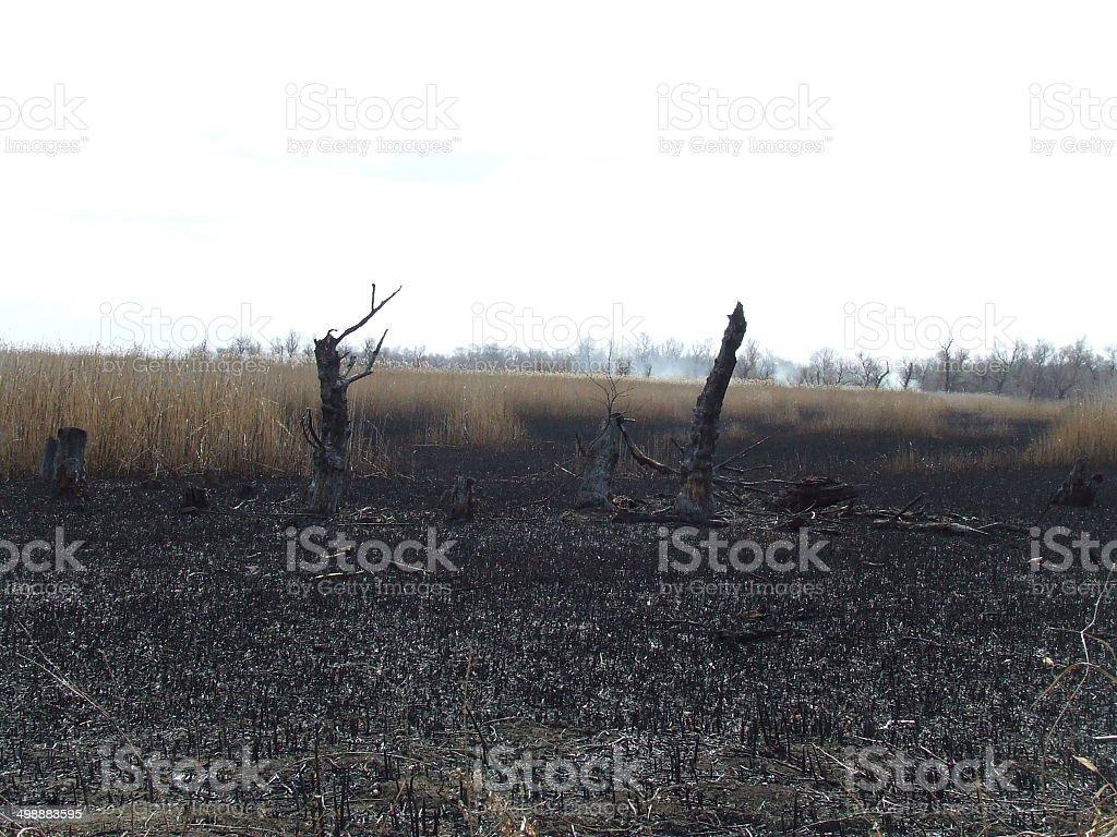 nature of Ukraine stock photo