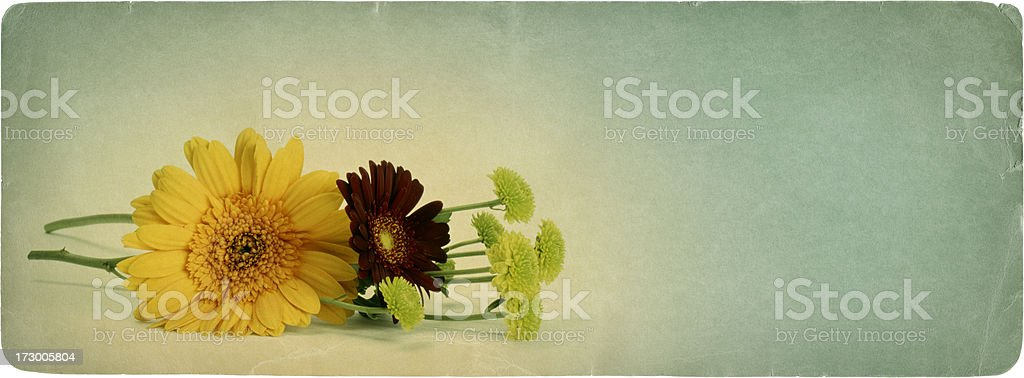Nature on Paper 11 royalty-free stock photo