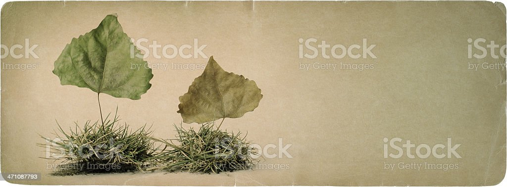 Nature on Paper 2 royalty-free stock photo