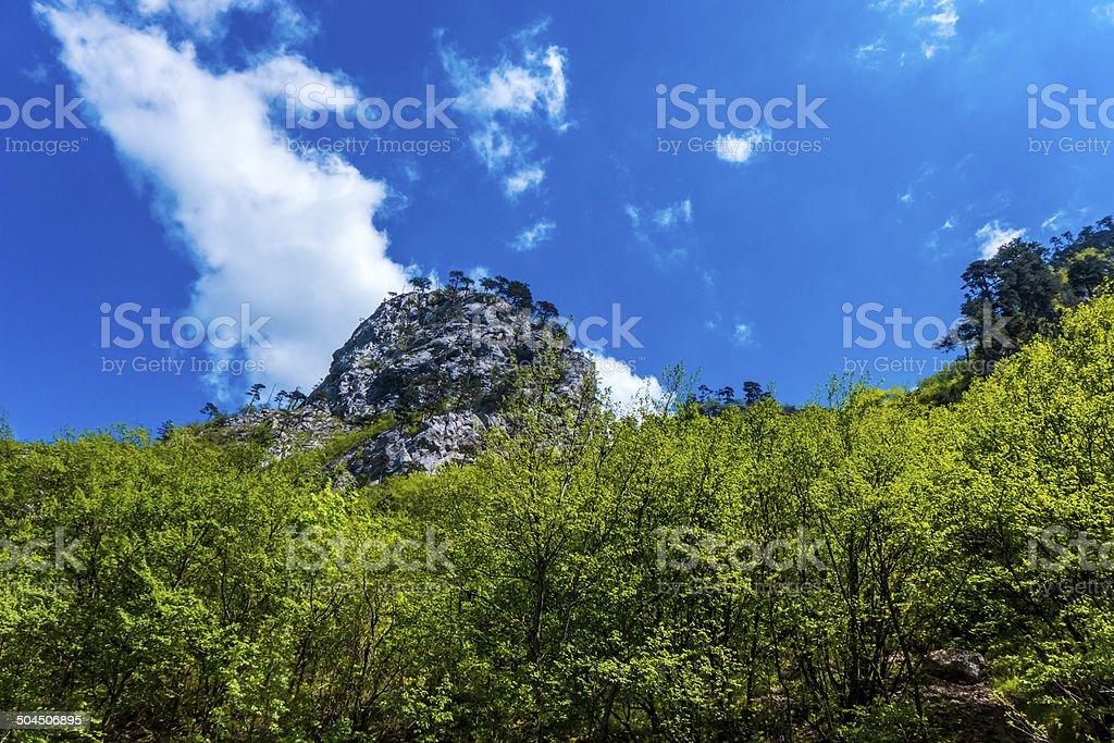 Nature park Sutjeska, Bósnia e Herzegovina foto royalty-free