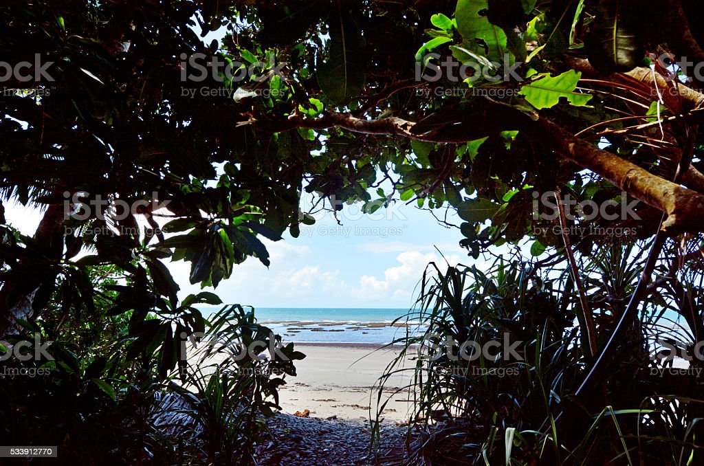 Nature passage to Cape Tribulation in Daintree National Park Que stock photo