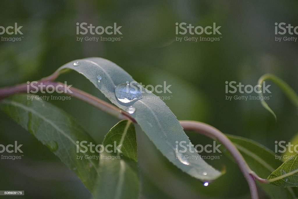 Nature Pearl royalty-free stock photo