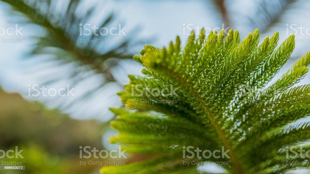 Nature Photo stock photo