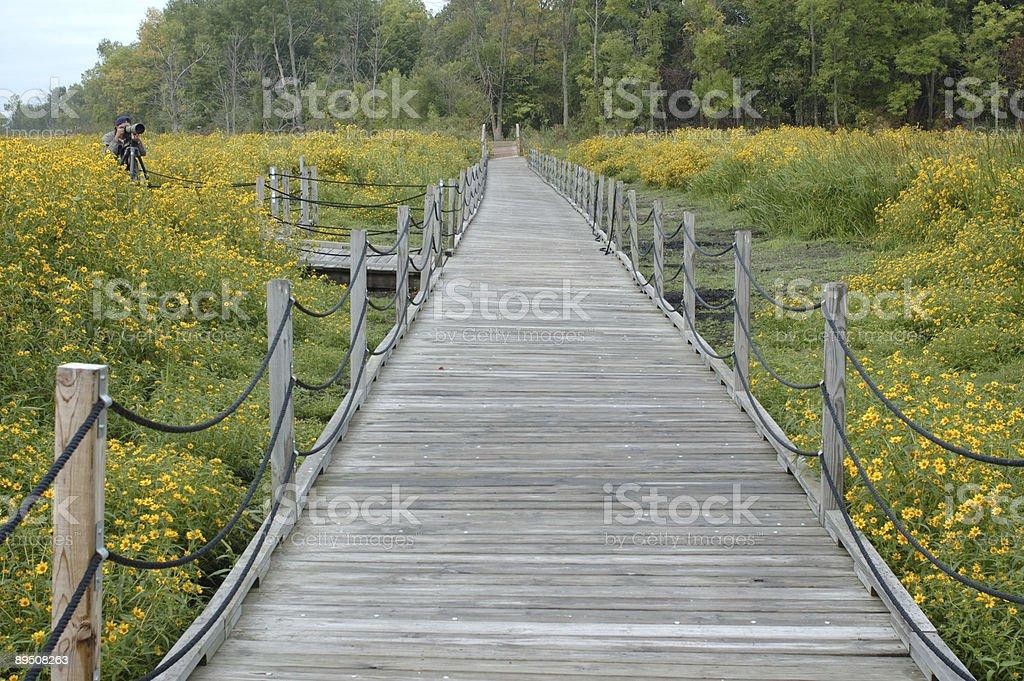 Nature photography royalty-free stock photo