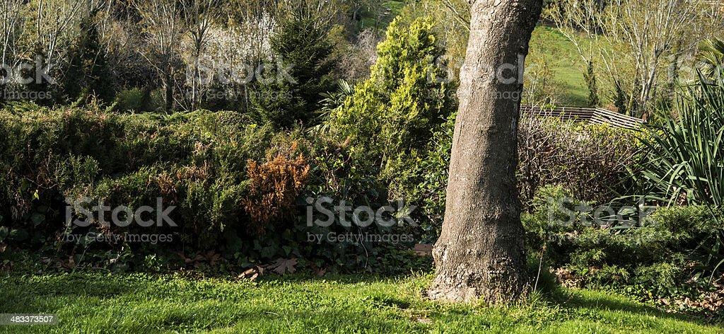 Nature stock photo