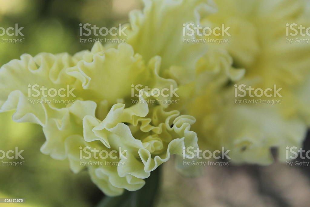 Природа#Nature royalty-free stock photo