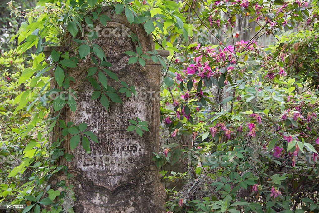 Nature Reclaiming a Headstone at Bonaventure Cemetery stock photo