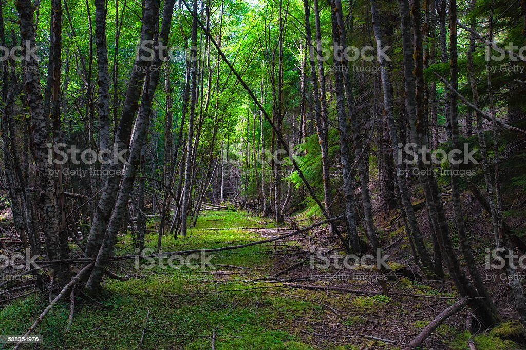 Nature Reclaiming an old road in the forest stock photo