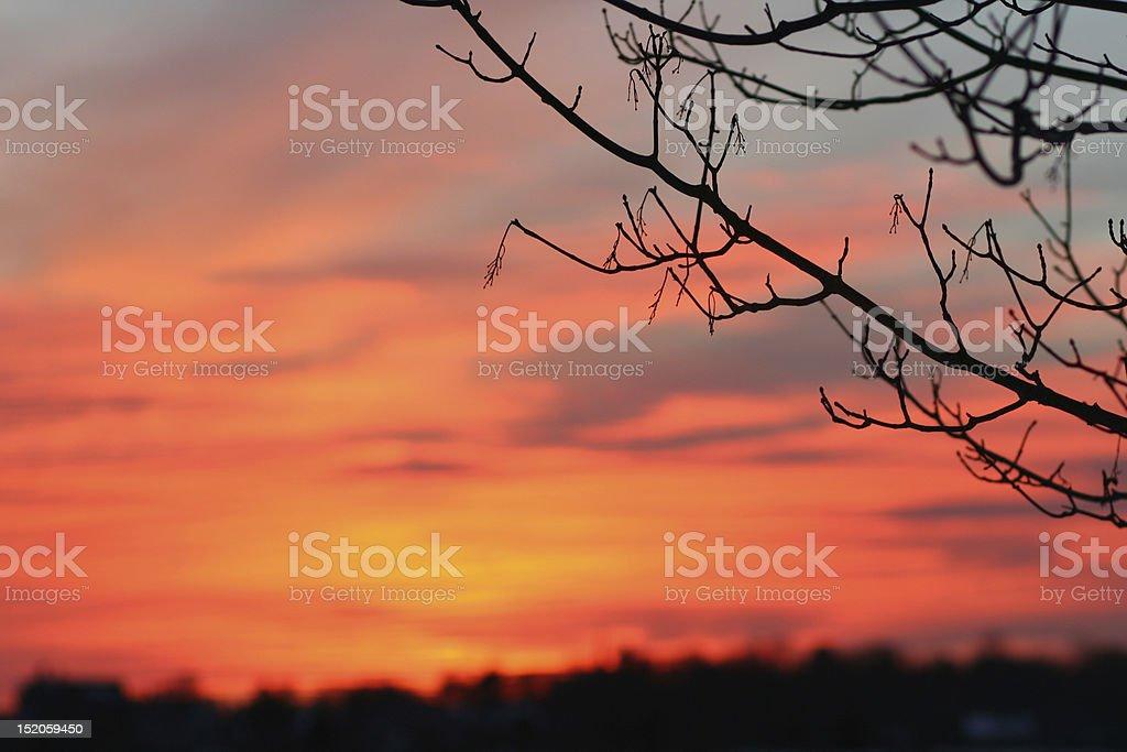 Nature: Seashore Sunset stock photo