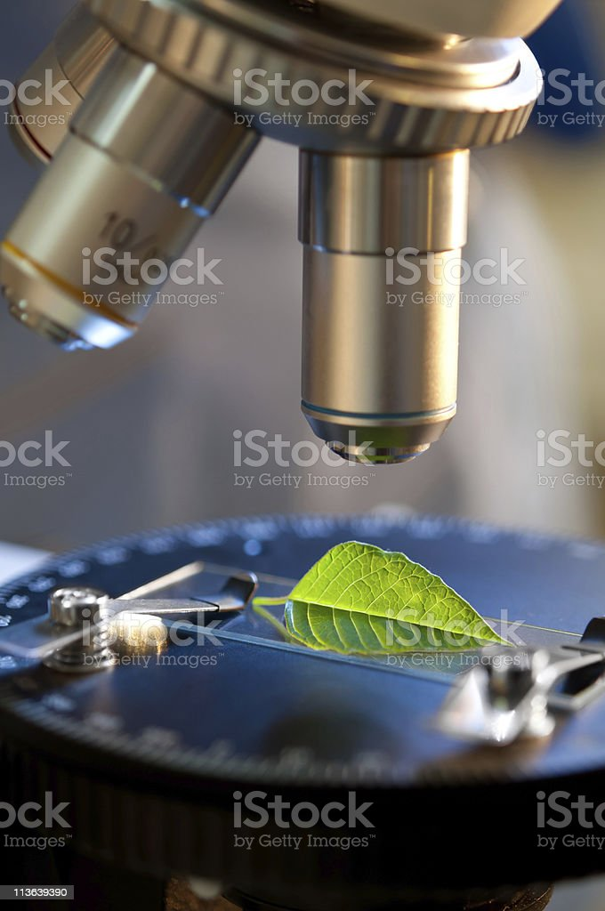 nature seen by  the microscope royalty-free stock photo