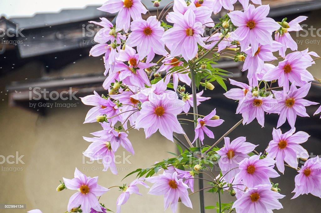 Nature - Spring stock photo